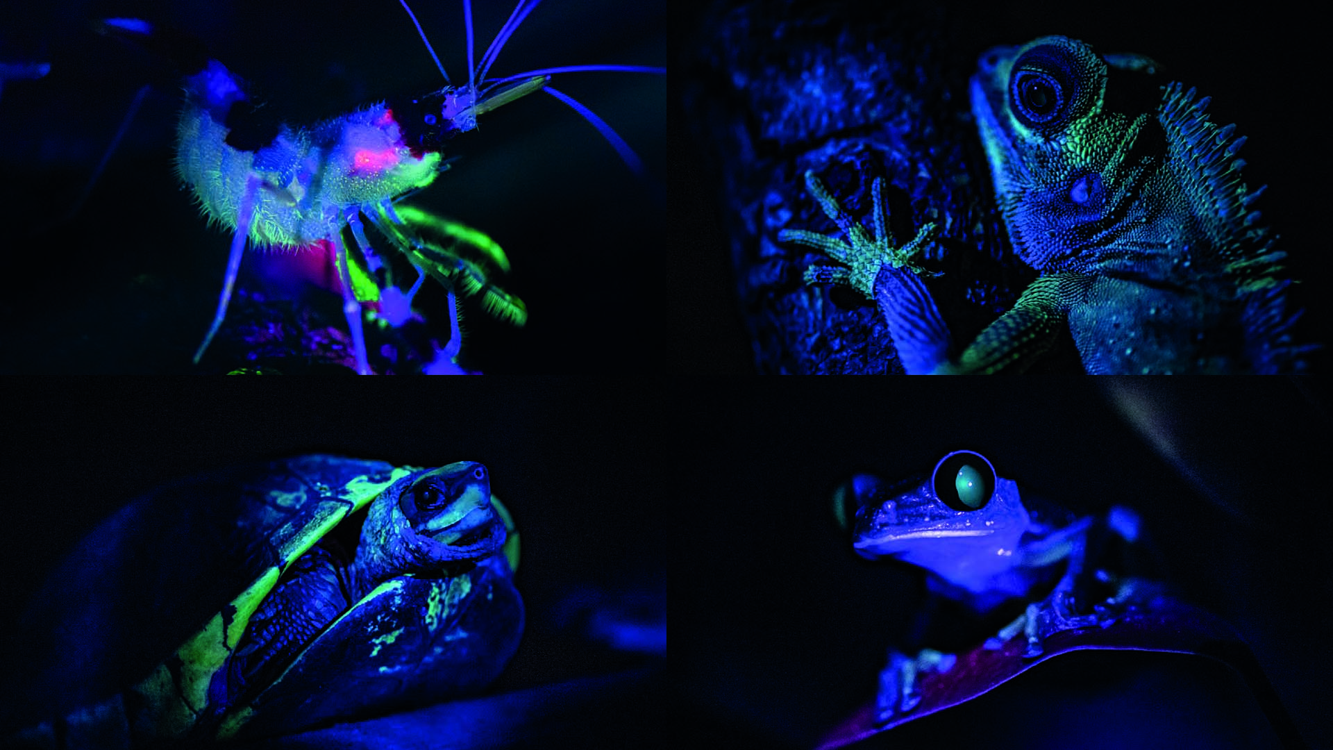 Chester Zoo shares incredible 'glow in the dark' animal images